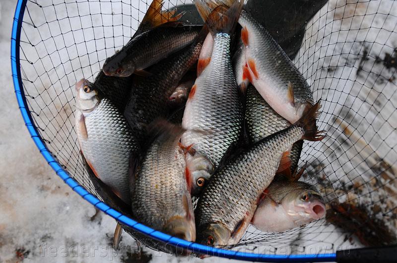 Марьино, улов, плотва, окунь