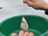 Ринат освобождает рыбу от крючка фото 1