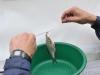 Ринат освобождает рыбу от крючка фото 2