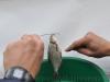 Ринат освобождает рыбу от крючка фото 3